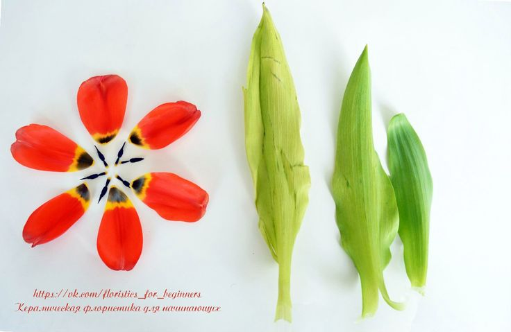 Тюльпан. Цветы для лепки | 22 фотографии