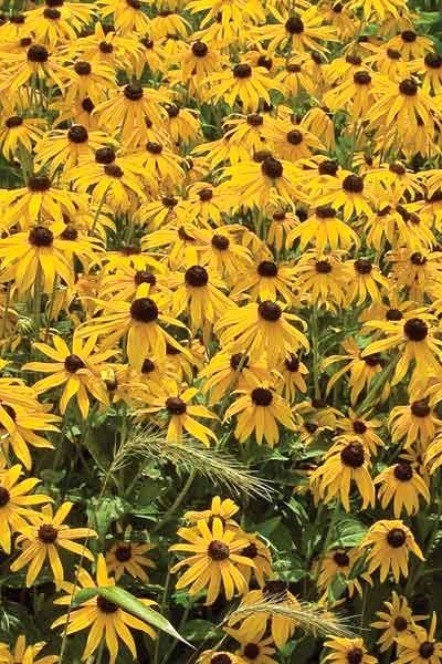87 best clay soil capable plants native to north america for Full form of soil