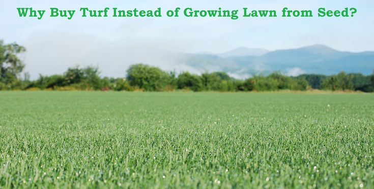 Why Buy Turf Instead of Growing Lawn from Seed?