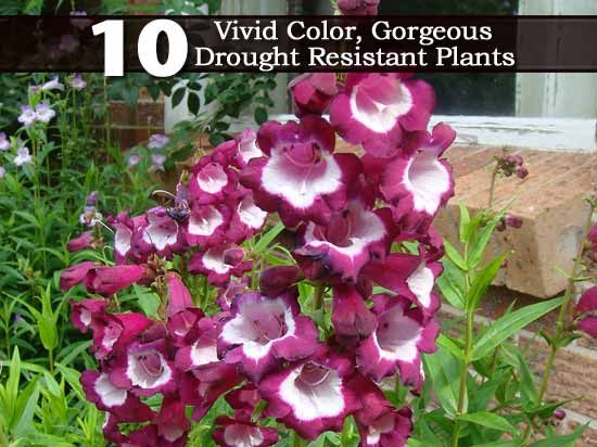 10 Vivid Color, Gorgeous Drought Resistant Plants