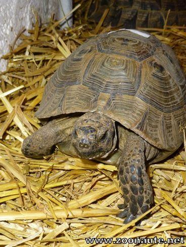 Les tortues terrestres du Zoo de La Chaux-de-Fonds sont sorties de leur cave à vin !