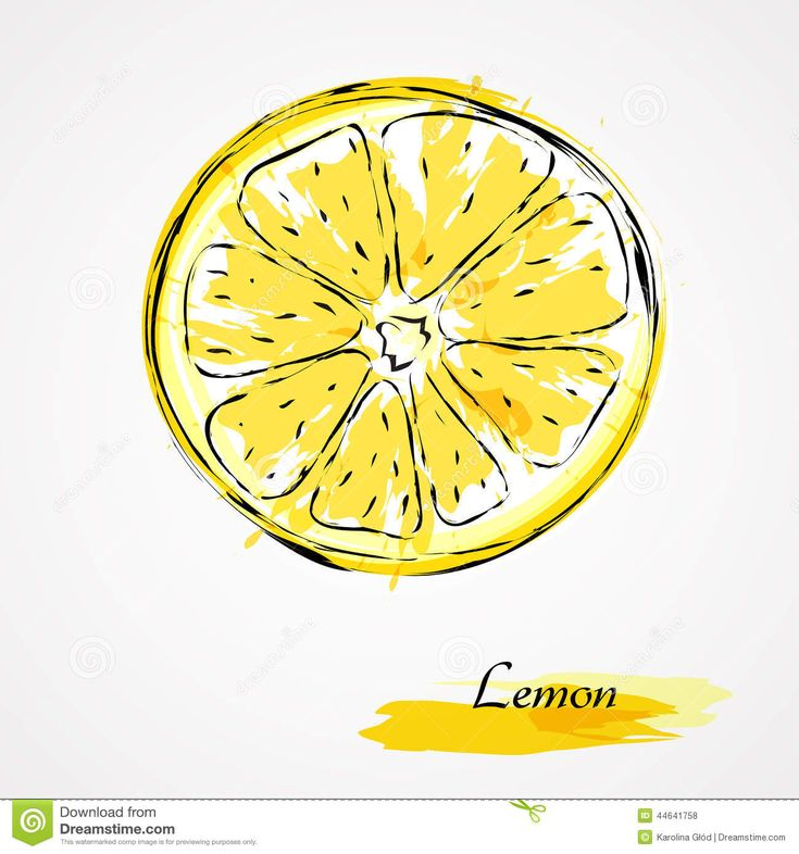 lemon-slice-hand-drawn-vector-round-piece-light-background-44641758.jpg (1300×1390)