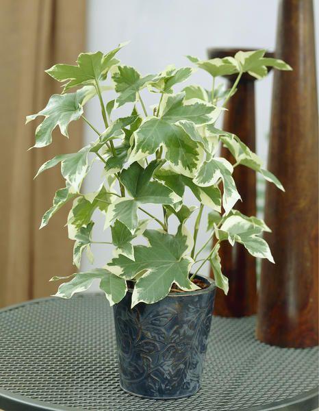 11 Zimmerpflanzen Fur Dunkle Ecken Kurbis Deko Pinterest
