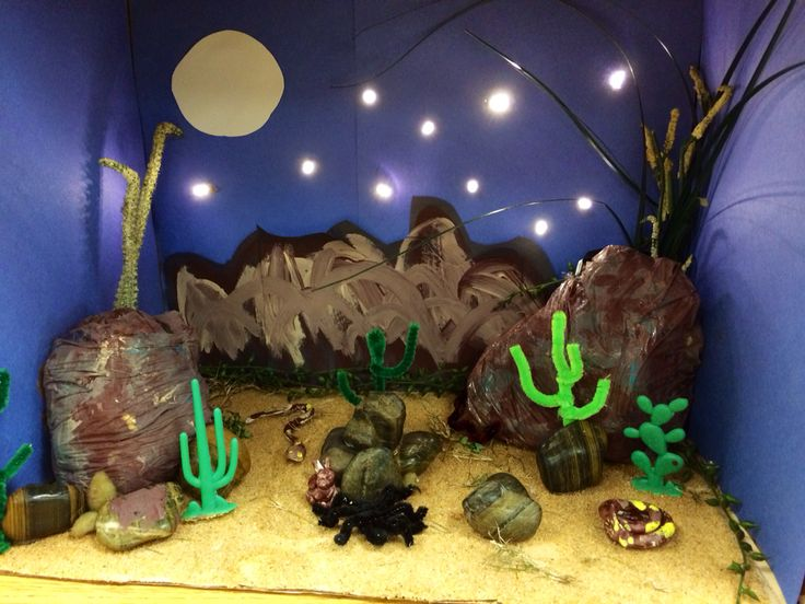 Desert. Biome. Diorama. Science. Project.