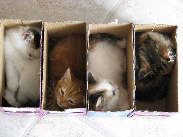 Four kitties in four boxes :-): Cat In Boxes, Boxes Kitty, Kitty Cat, Funny Pics, Sweets Dreams, Cat Boxes, Kittens, Crazy Cat Lady, Animal