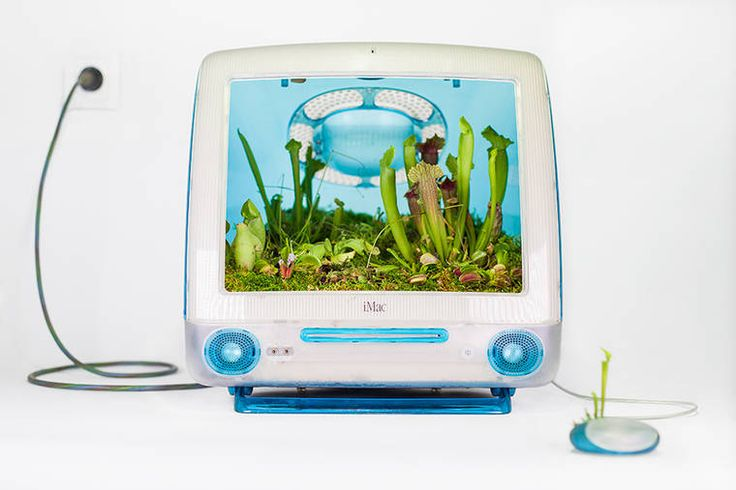 Avec son dernier projet intituléPlant your Mac!, notre ami Christophe Guinet, akaMonsieur Plant, s'amuse àtransformer de vieux ordinateurs Mac en terrar