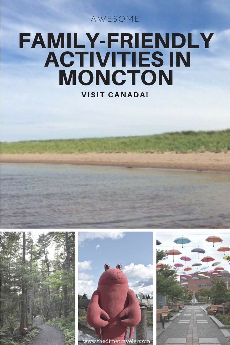 61 Family Friendly Living Room Interior Ideas: Awesome Family Friendly Activities In Moncton, New