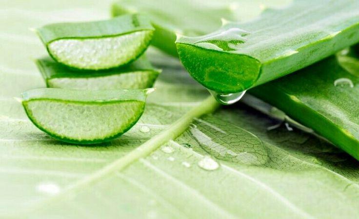 El Aloe vera : ¿Cómo usarlo en tus productos cosméticos?