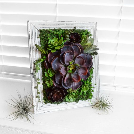 how to get vibrant succulent plants