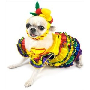 Halloween Costumes For Dogs 2012