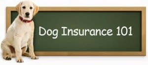 Why Dog Insurance Could Be a Dying Breed