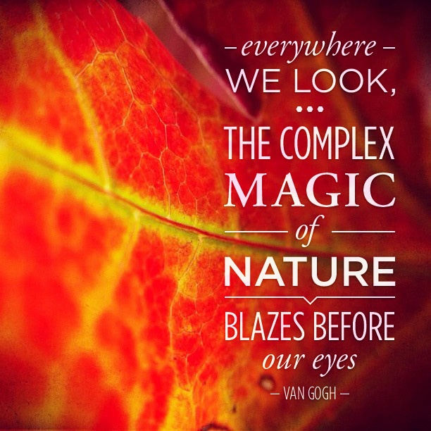 Everywhere we look, the complex magic of nature blazes