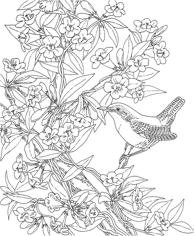 Wren And Yellow Jessamine South Carolina Coloring Page From State Birds Category Select 25143 Printable Crafts Of Cartoons Nature Animals