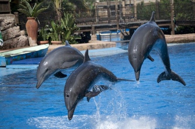 USHAKA MARINE WORLD EASTER EGG HUNT (April 19-20)  See Where to Stay accommodation options on DURBAN POINT WATERFRONT Click on link for more info http://www.wheretostay.co.za/kzn/dm/accommodation/durban-point-waterfront.php