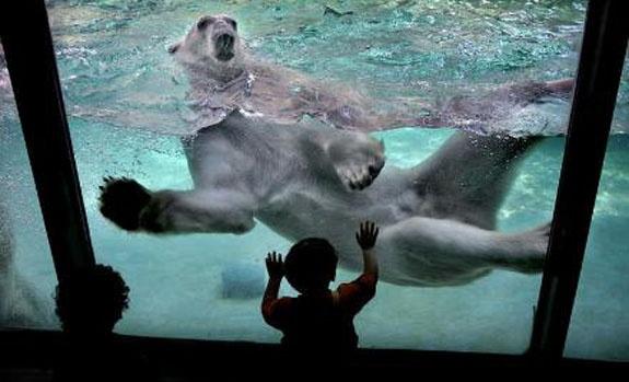 minnesota zoo memorial day