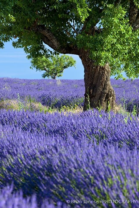 Oh, France, how I miss you!  Provence might be going onto my trip calender soon...