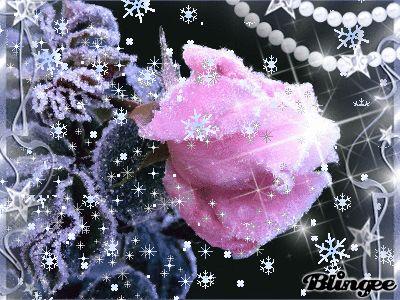 Зимняя роза...