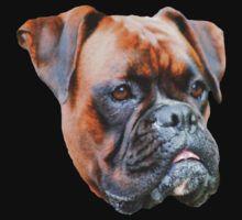 Germany boxer dog  by Rostislav Bouda