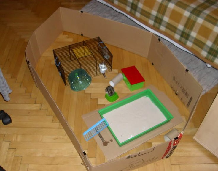 Cardboard Hamster Playpen - PetDIYs.com ( not my pic, by is my pin )  Cute! Mind you, I would put cardboard/newspaper under ALL of the exercise pen so when they pee it wont kill the hardwood underneath...