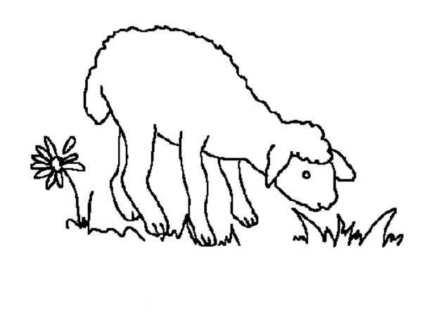 Best 25+ Lamb Template Ideas On Pinterest
