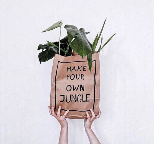 Make your own jungle, plant inspiration, green life, monstera, indoor plants, indoor garden @katejpeterson