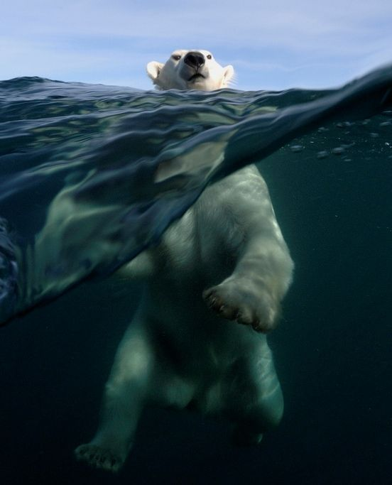 Awesome shot by French diver-photographer Joe Bunni. Location:  Repulse Bay, Nunavut, north of Hudson Bay in Canada