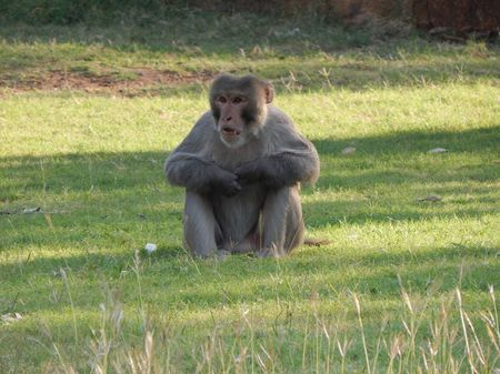 The Monkey Lord Photo by Manoj Kumar V. � National Geographic Your Shot