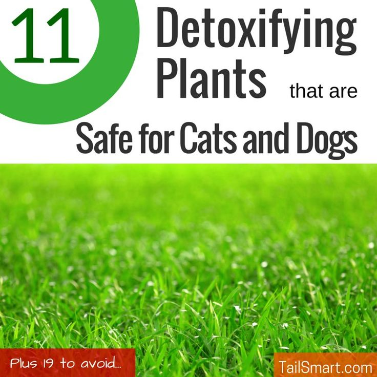 After reading the great list of 30 Plants That Can Detox The Air In Your Home over at Sound Body Life, we started wondering which of these plants are safe for cats and dogs.  While I'd love the air in my home to be more healthy and of a higher quality, I definitely wouldn't want to …