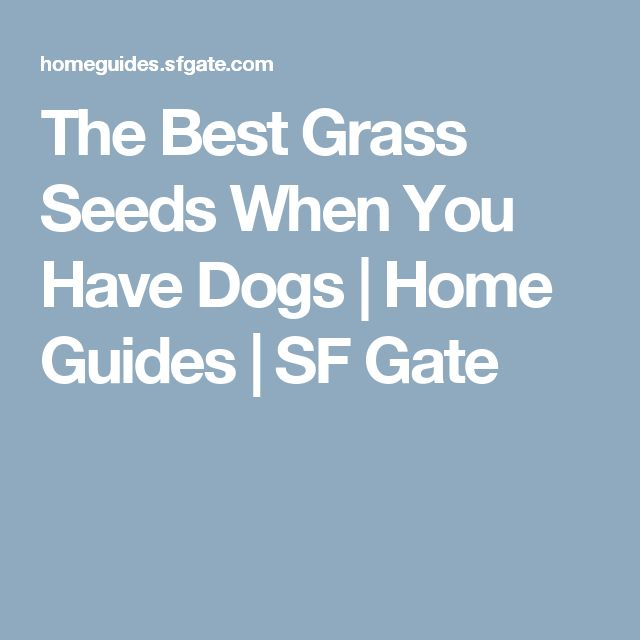 1000+ Ideas About Best Grass Seed On Pinterest | Grass Seed