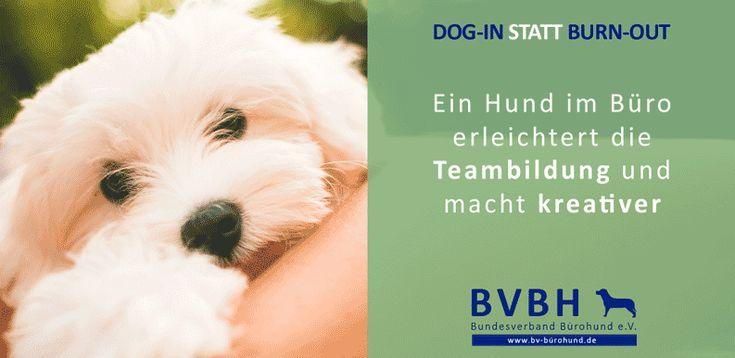 Infocard: Bürohund Teambildung