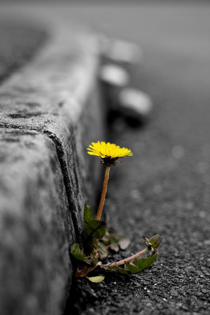 """Ho visto un fiore giallo nato in una strada dentro una fessura in mezzo al marciapiede un cane che passava curioso l'ha annusare chiedendosi cos'era quel """"coso"""" sconosciutooooo un fiore di città non ha trovato un prato"""