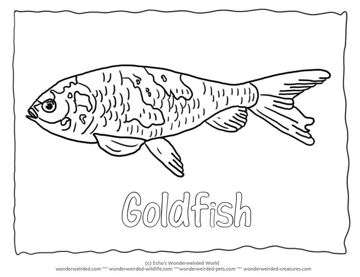 Goldfish Coloring Pic 4 Picture To Color For Our Fish Pages Collection Black