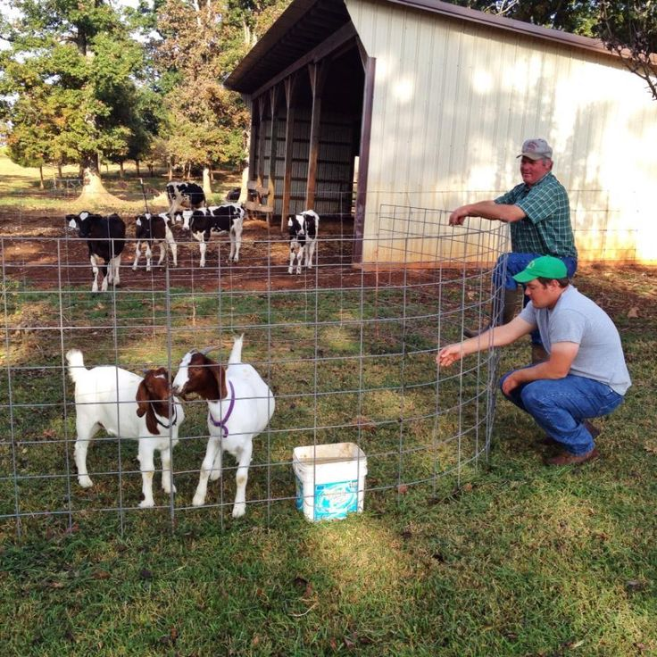 Good afternoon folks,  Another quick blog post covering the following things - We've Got Goats - Today's Schedule - A bit of info about the Family Farm Day tomorrow  Check it out http://wp.me/p3X041-2g  #CornMaze #YodersFarmVa #Lynchburg #FallFun #FamilyFun #Hayride #Goats