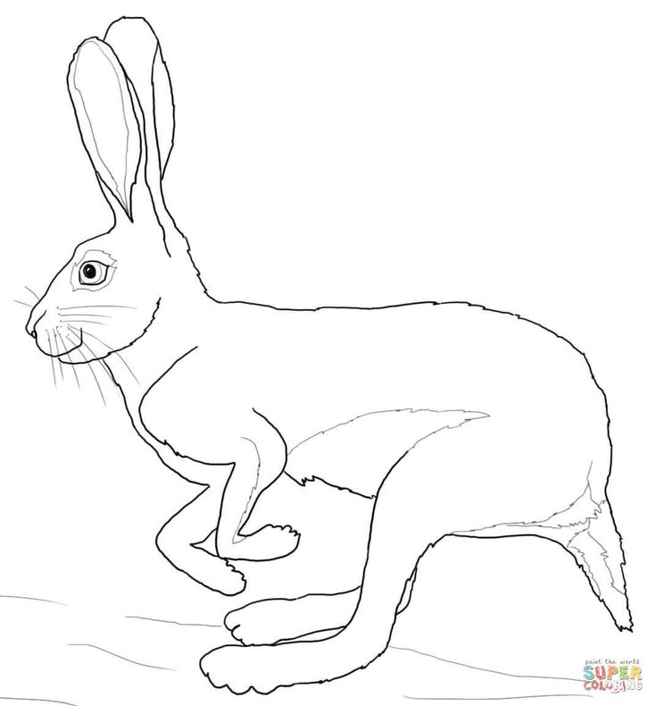 hare coloring page - Google-haku
