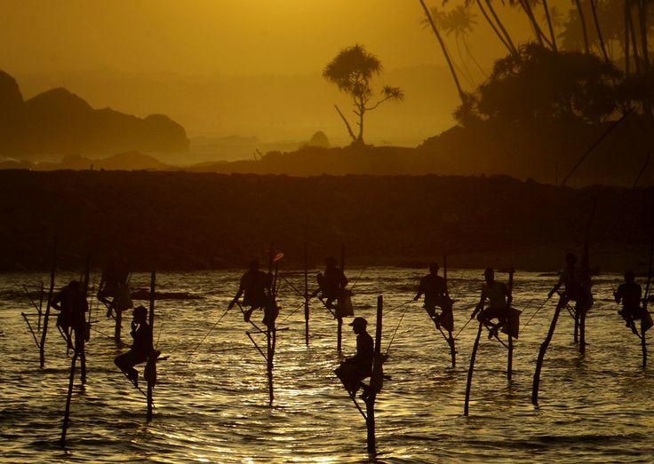 Stilt Fishermen of Koggala, Sri Lanka