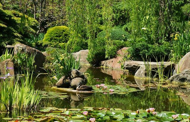 Himeji Gardens, Adelaide. South Terrace, CBD