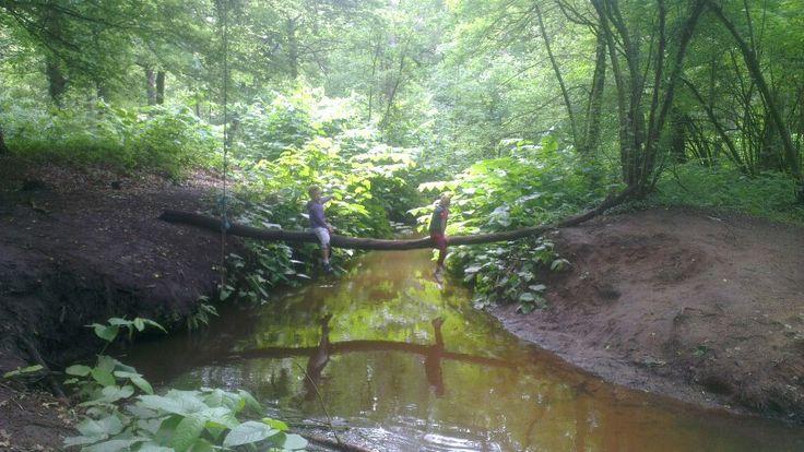 In the woods, landgoed de Utrecht