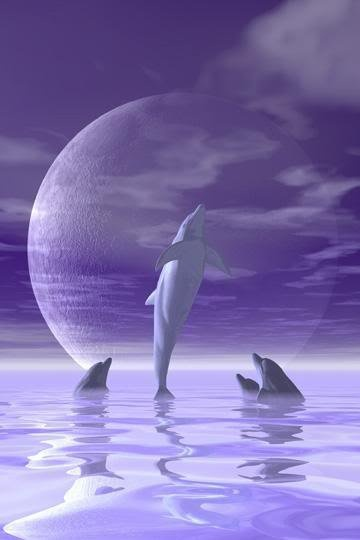 real purple dolphin