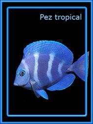 Ars Lamia: Totem del Pez Tropical