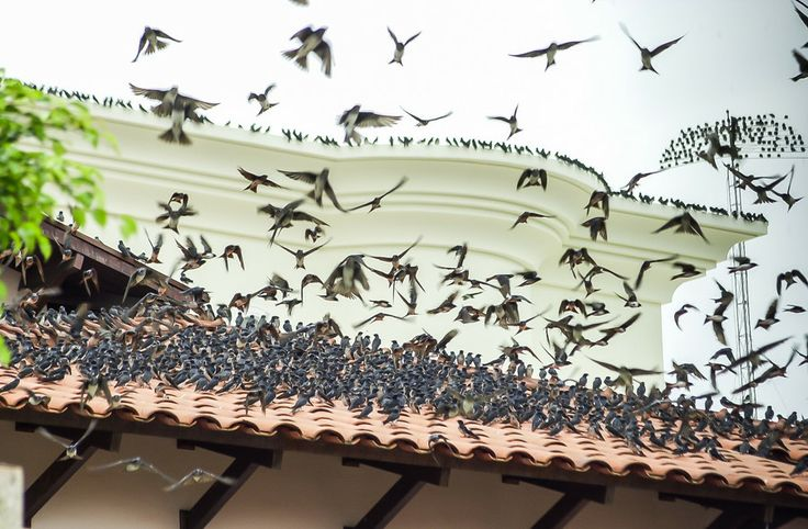 Andorinhas Telhado by Jair Ferreira on 500px