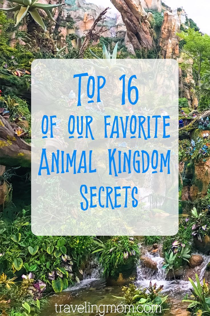 Disney S Animal Kingdom Secrets Animal Kingdom