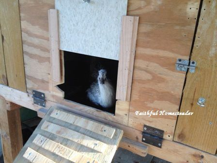 Automatic chicken coop door