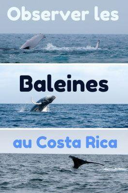 Où observer les baleines au Costa Rica ? Nos bons plans, nos spots préférés pour rencontre la baleine dans tous ses états !