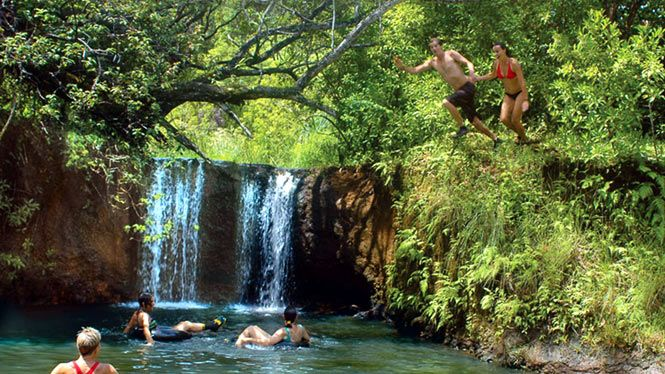 Swimming in a secluded water hole with a small waterfall - Jungle Waterfall Kayak Adventure Princeville Ranch Adventures