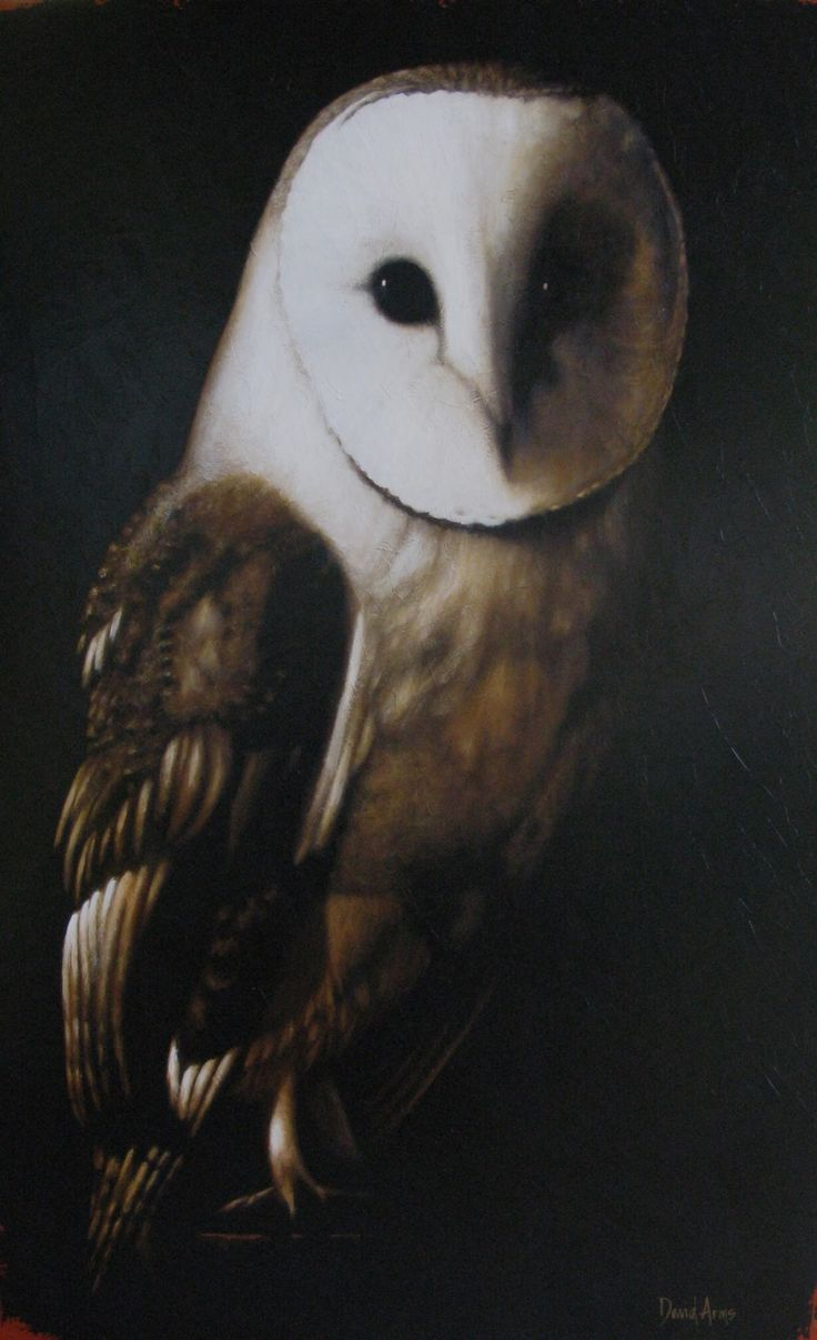 Owl greeting card set welsh artist jen delyth celtic art studio -  Sage X By Tennessee Artist David Arms This Painting Looks So Realistic