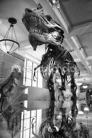 Tyrannosaurus rex — Foto stock © Juan_G_Aunion #41259649