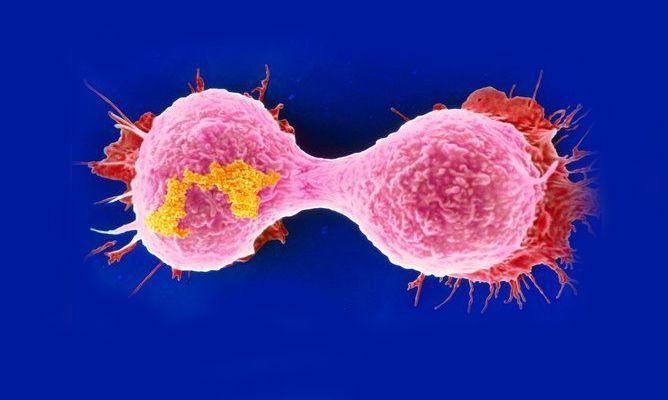 Descubierto el mecanismo que vuelve a las células tumorales adictas al azúcar La captación de glucosa alimenta la proliferación de los cánceres El proceso de 'limpieza del ADN' ofrece una diana contra el cáncer Si algo caracteriza a las células tumorales es su crecimiento descontrolado. Y, para ello, necesitan mucha energía. Para conseguirla, las célulastumorales …