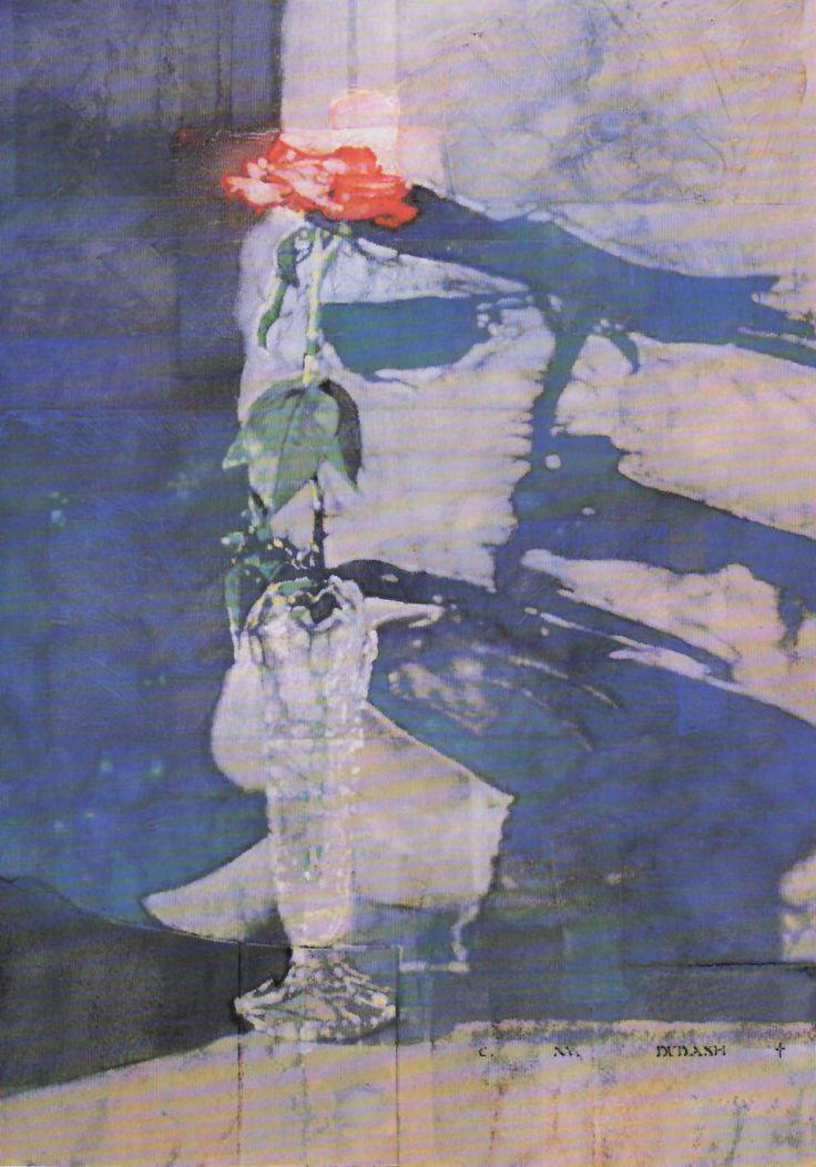 Rose :: C. Michael Dudash