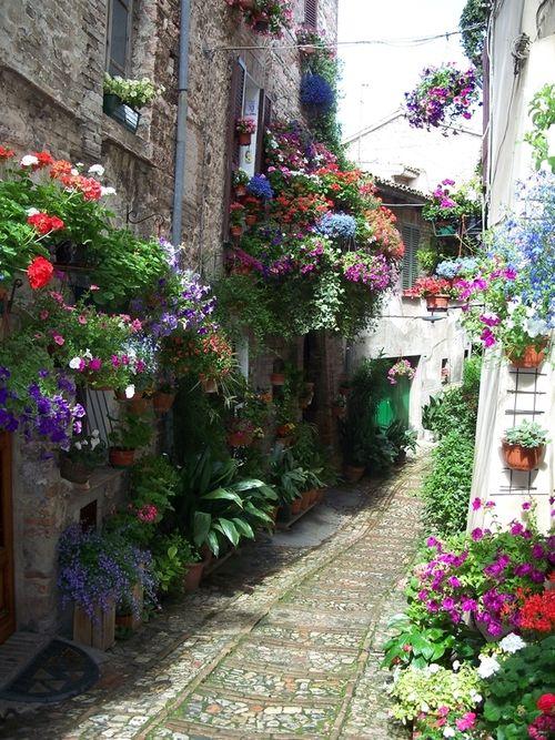 Flowered Lane, Spello, province of Perugia, Umbria region, Italy