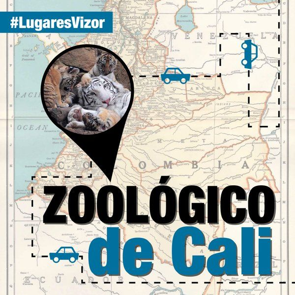 Si estás en colombia, no dejes de visitar el zoológico de cali, de la mano de nuestro servicio innovador Vizor. #LugaresVizor  www.vizormobil.com